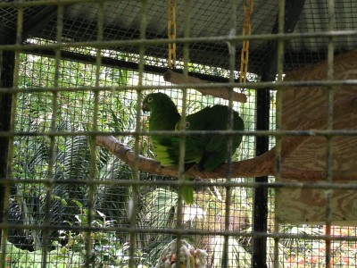 Parrots at the Pana`ewa Rainforest Zoo