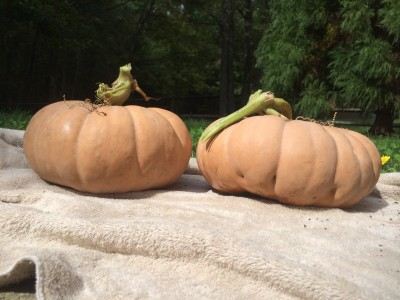 More pumpkins!